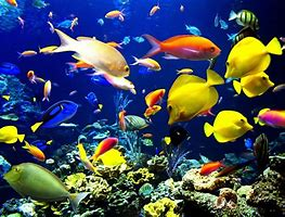 pet care fish