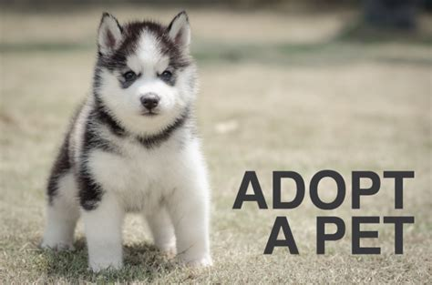 pet adoption: puppy