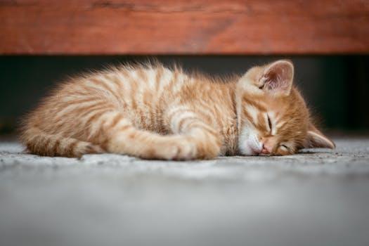 kittens need good homes