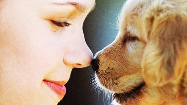 pet adoption how to choose a pet