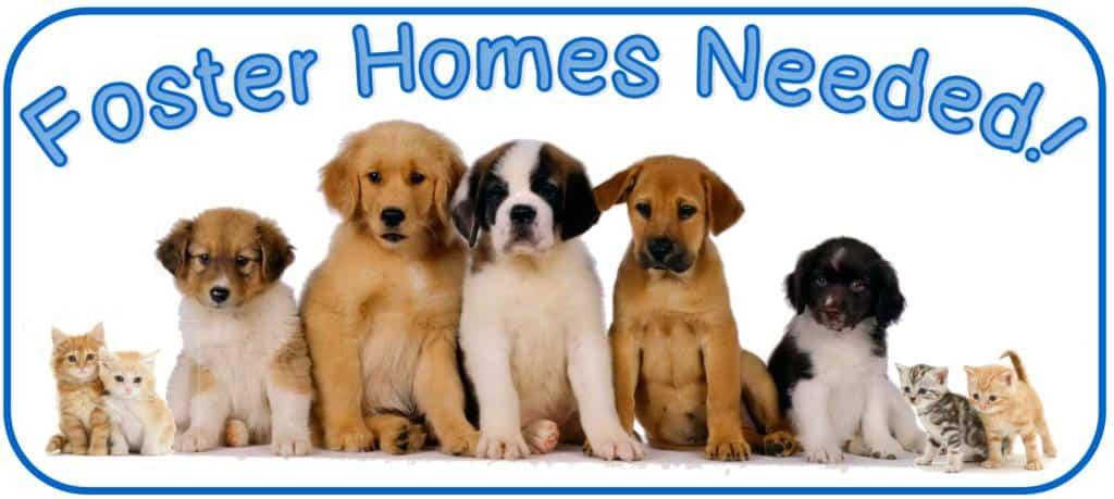 pet adoption: preparing for your pet