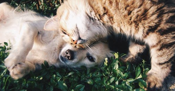 pet care dog and cat