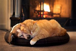 safe cosy place